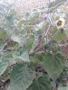 Gartenimpressionen 2014_1
