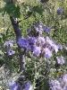 Gartenimpressionen 2014_9