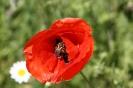 Gemeinschaftsgarten Gartenimpressionen 2015_10