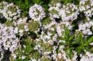 Gemeinschaftsgarten Gartenimpressionen 2015_3