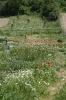Gartenimpressionen 2015