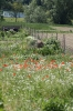 Gemeinschaftsgarten Gartenimpressionen 2015_4