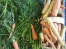 Gemüseernte 2014 im Gemeinschaftsgarten_1