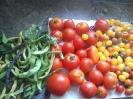 Gemüseernte 2014 im Gemeinschaftsgarten_3